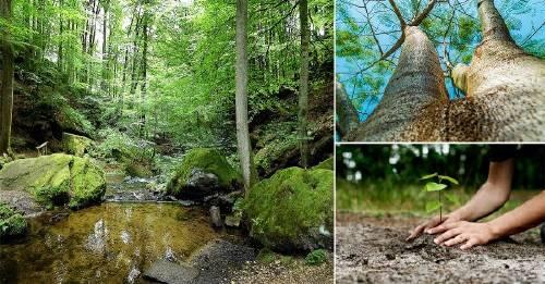 ¿Sabías que los árboles previenen inundaciones?
