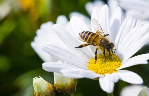 Descubre cuál es el significado espiritual de las abejas