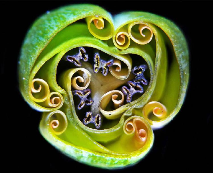 9 - Andrei Savitsky Small World Photomicrography Competition