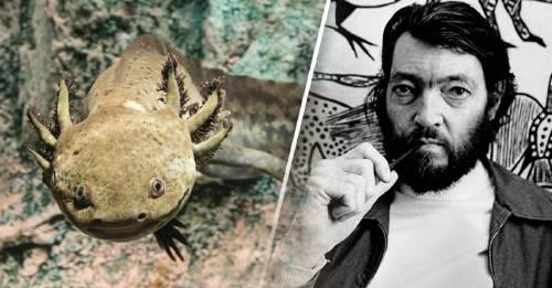 El ajolote, la mítica criatura que unió a México y Argentina
