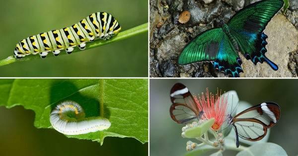 18 bellas metamorfosis que te harán volar