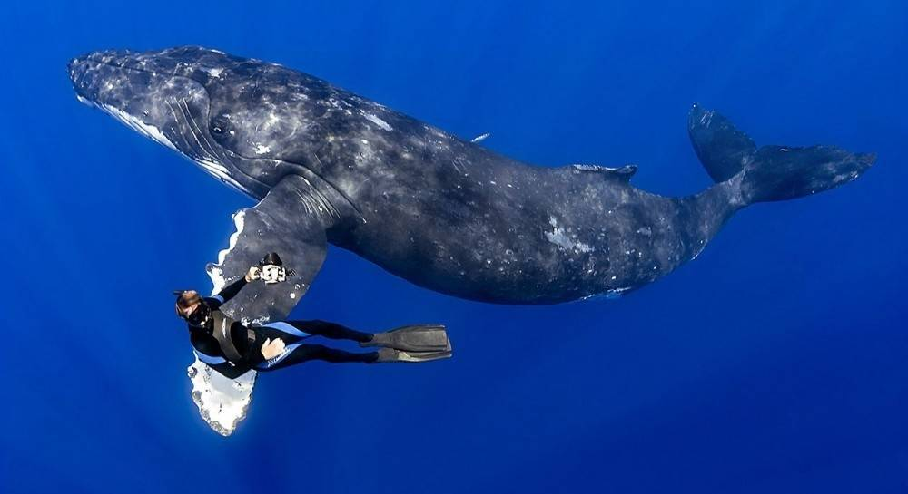 Hermosas imágenes de personas que nadaron con ballenas