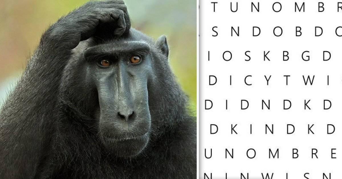 Si encuentras tu nombre entre estas letras eres realmente un genio