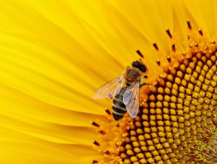 Las abejas pueden detectar la contaminación