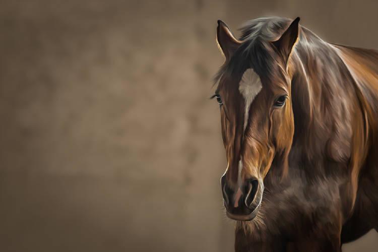 ¿Cuántos caballos ves? descubre cuál es tu verdadera naturaleza
