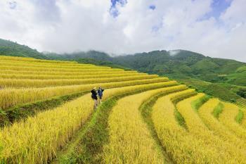Terrazas de cultivo ¿En qué consisten?: ¿Cómo eran las de los incas?