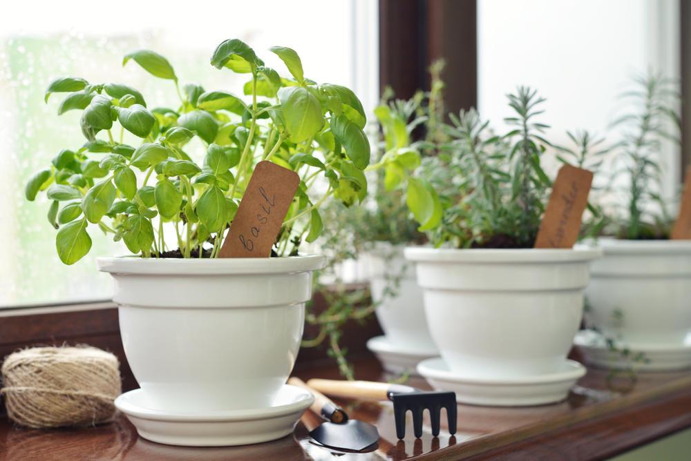 Plantas aromáticas: cuáles escoger para cultivar en el hogar