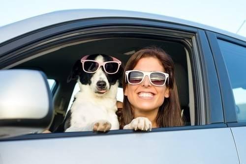 7 consejos para evitar el mareo de los animales al viajar en coche