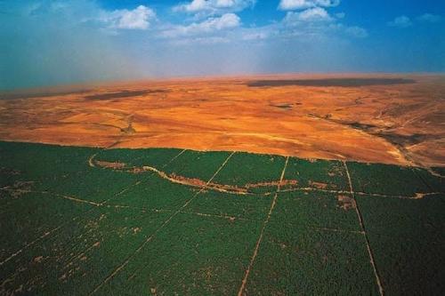 La gran Muralla Verde, el sueño ecológico de África ya está en construcción