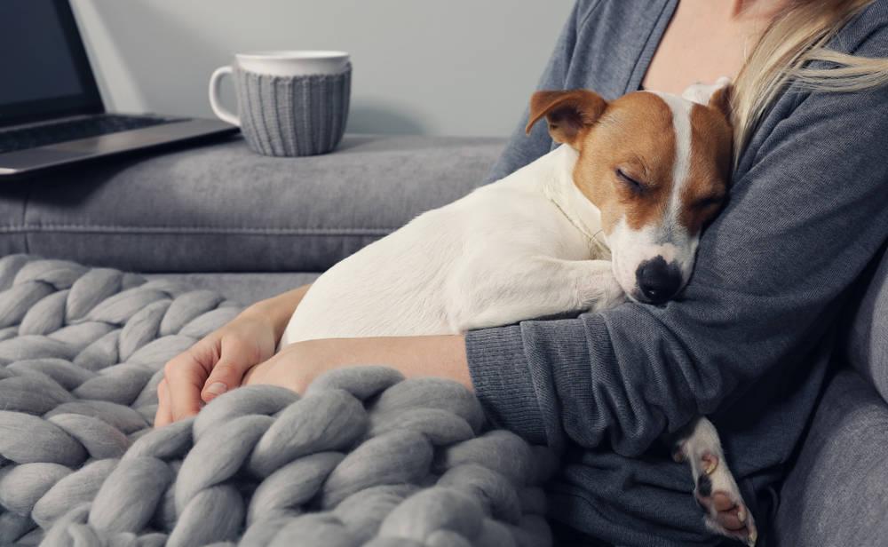 ¿Tener mascotas ayuda a sobrellevar el aislamiento por el coronavirus?