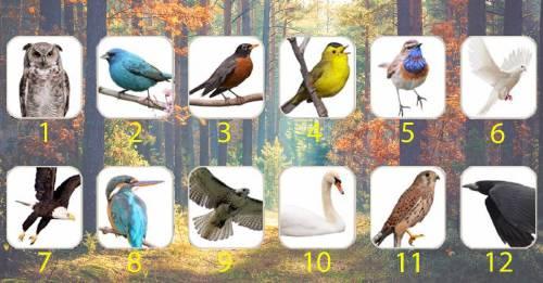 Mira lo que el pájaro de tu mes del nacimiento revela sobre ti