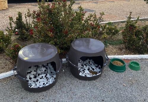 perro-casas-envases-potes-callejeros