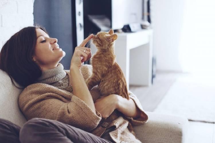 0_gatos_emociones_(1).jpg