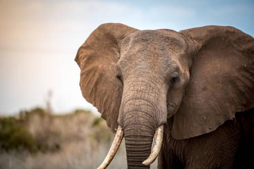 El misterio de la muerte de cientos de elefantes en Botsuana