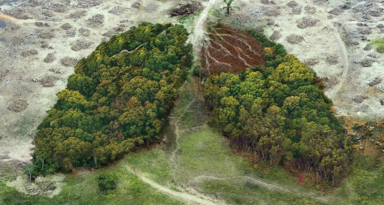 La deforestación global ha disminuido pero aún queda mucho por hacer