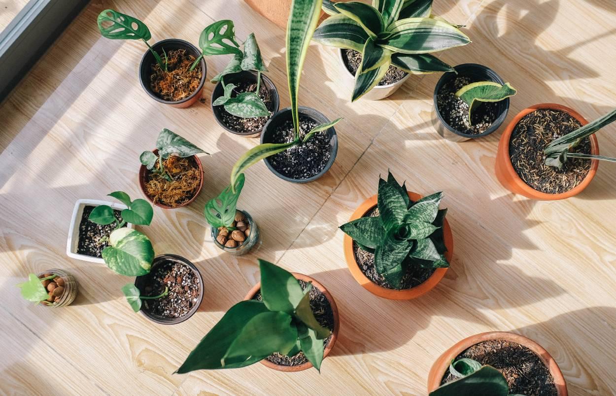 5 plantas de interior que te resultarán muy fáciles de cuidar