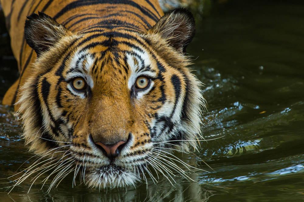 Estos son los animales en peligro crítico de extinción para el 2020