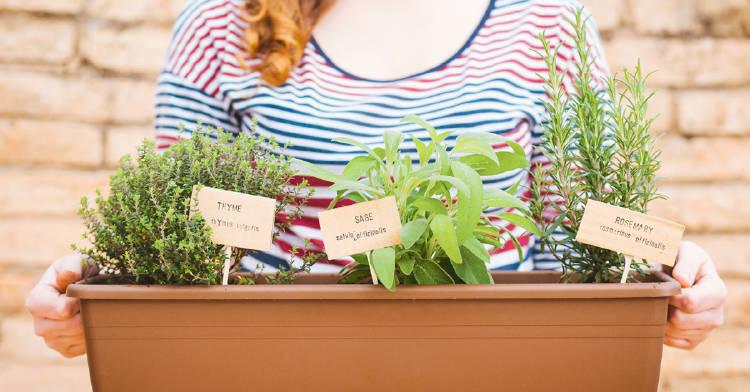 consejos-iniciar-huerto-plantas-aromaticas