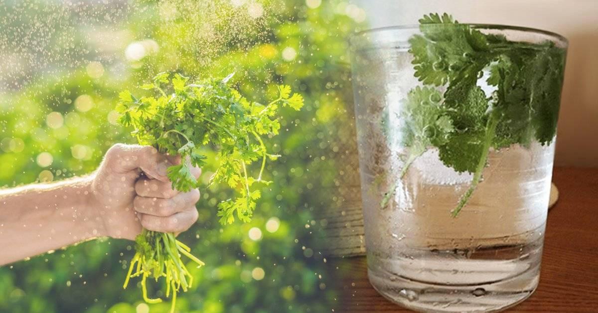 La hierba bioabsorbente que purifica el agua y limpia nuestro cuerpo