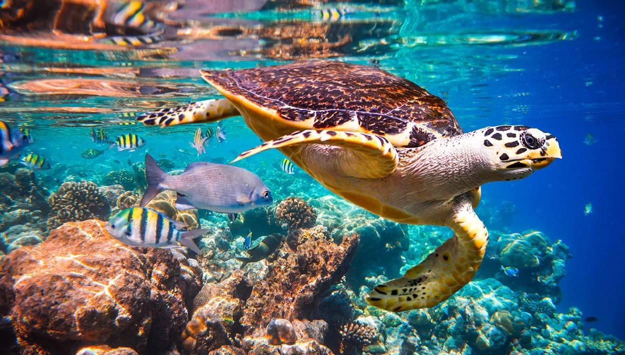 ¿Qué pasará cuando las tortugas se extingan?