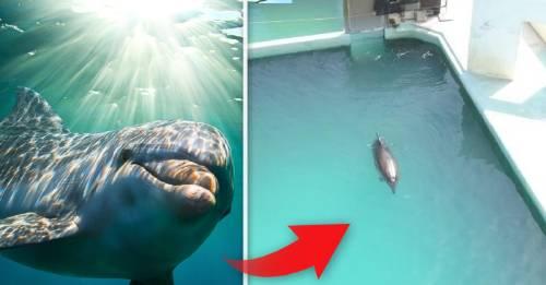 El video de este delfin abandonado te romperá el corazón