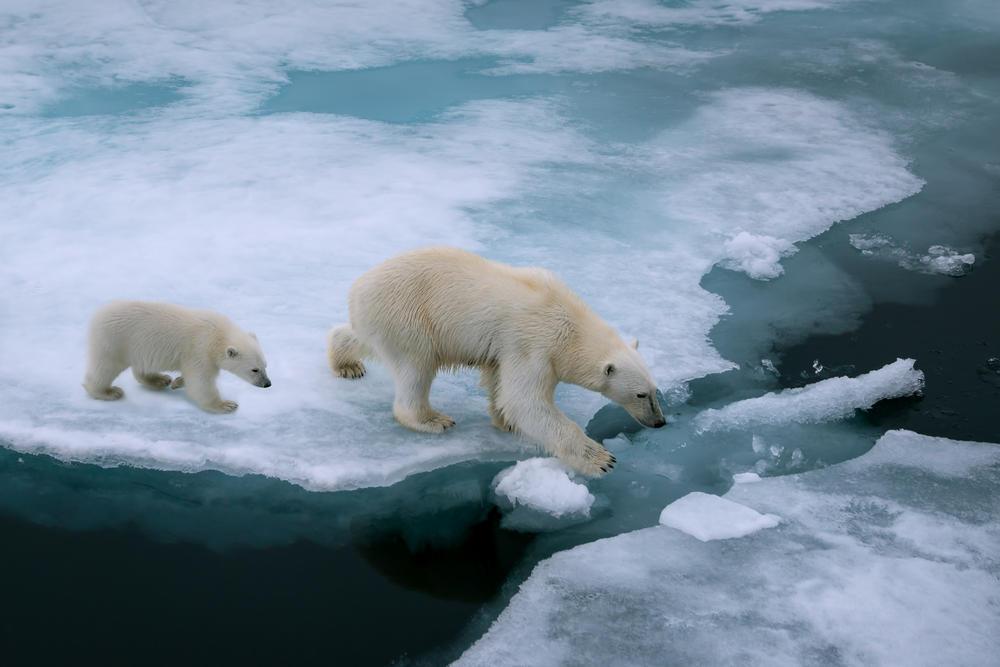 Advierten que podrían liberarse 33 virus ancestrales por el calentamiento global