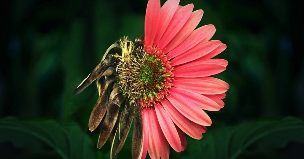 No solo los animales están en peligro de extinción: 1 de 5 plantas en el mun..