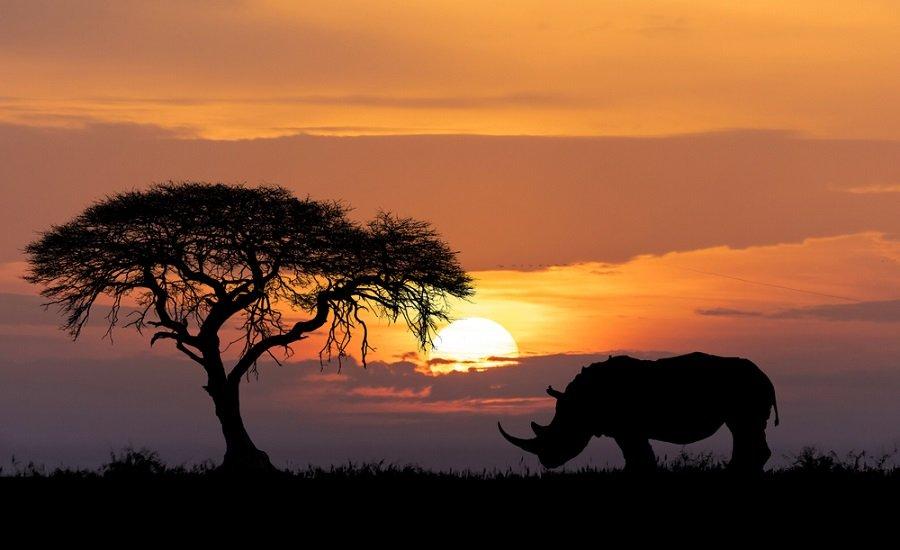 sabana rinoceronte