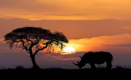 Rinocerontes: una lucha sin tregua en contra de la extinción