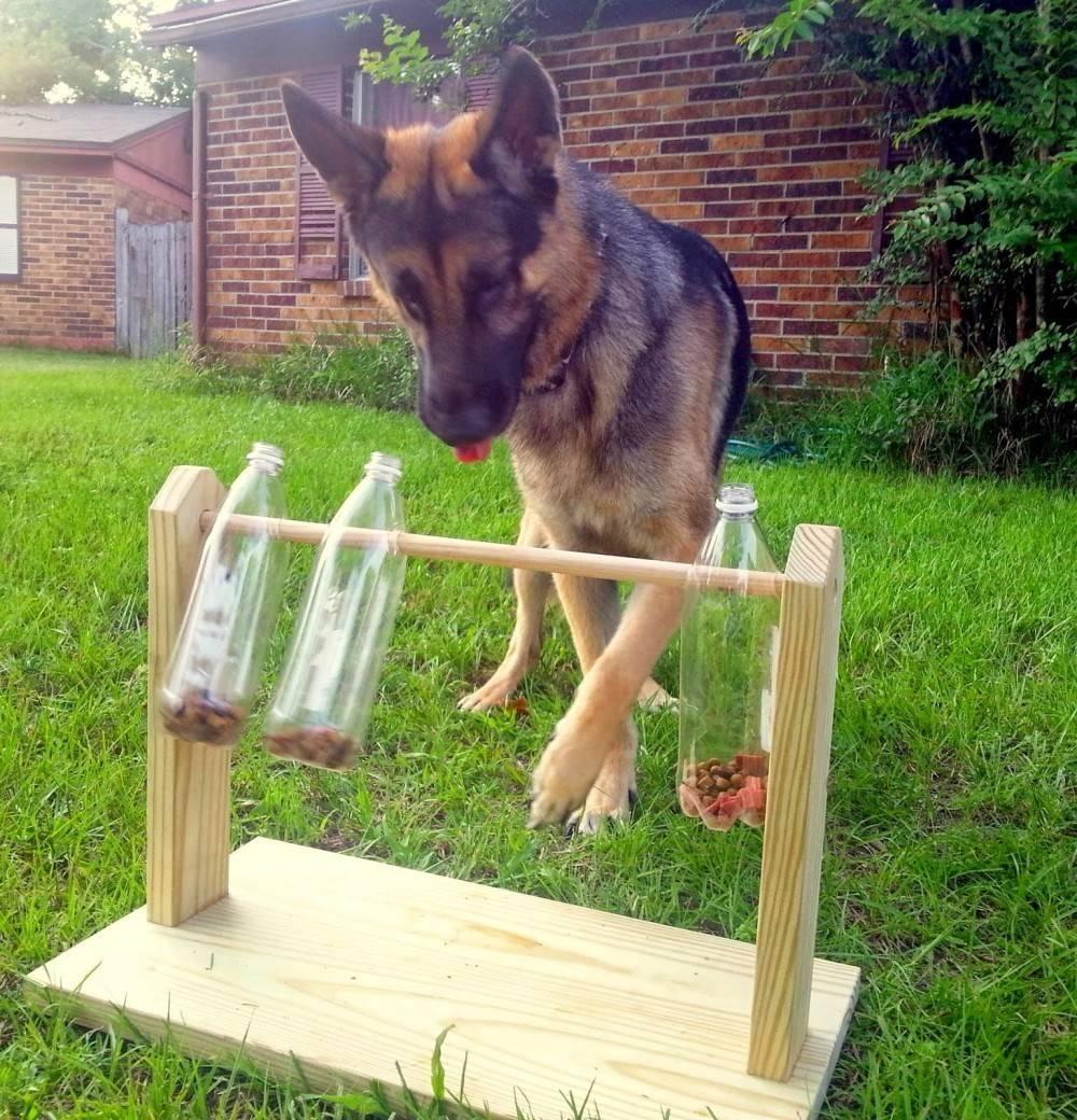 Cómo hacer un comedero-juguete para perros con botellas de plástico