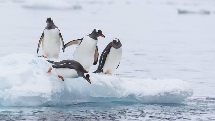 Antártida: curiosidades sobre el planeta