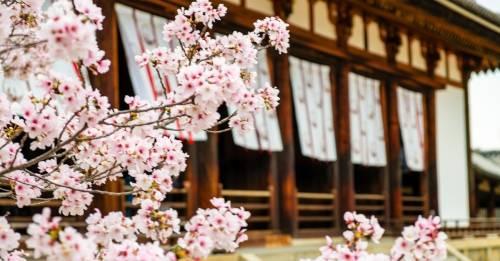 3 pasos para seguir la filosofía japonesa de limpieza y librar de malas energ..