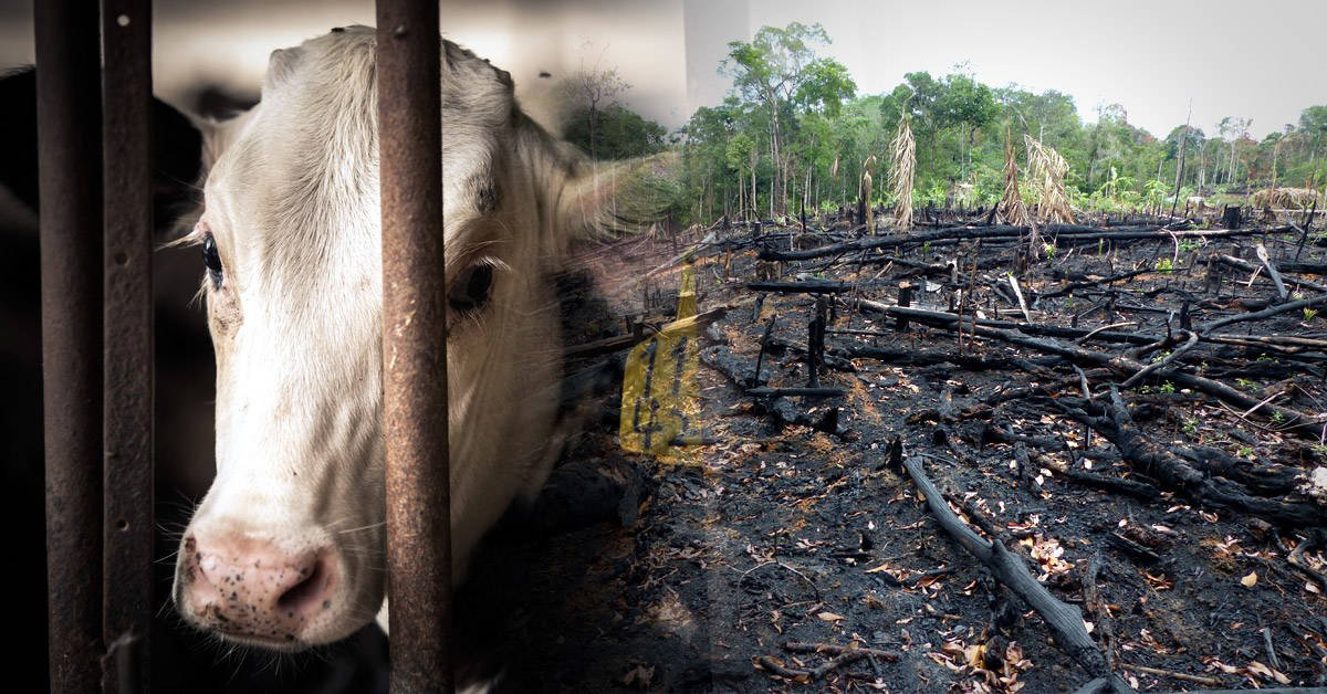 Reducir tu consumo de carne puede ayudar a salvar la Amazonia: ¿por qué?