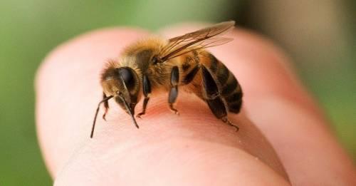 Comprobado: los agroquímicos dañan tanto a las abejas como a las personas