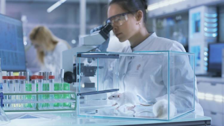 cientifica en su laboratorio experimenta con una rata
