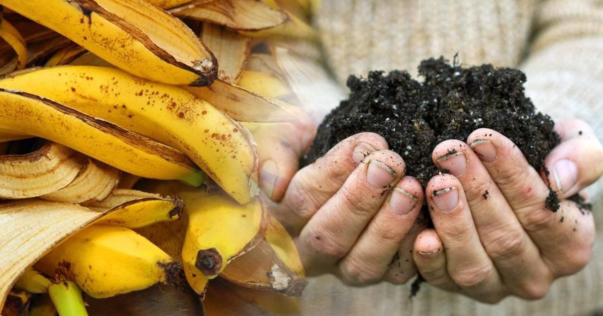 5 formas rápidas de hacer abono orgánico casero para tus plantas
