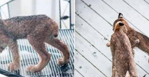 Sorpresa: unos animales que jamás se dejan ver invaden de pronto la casa de u..