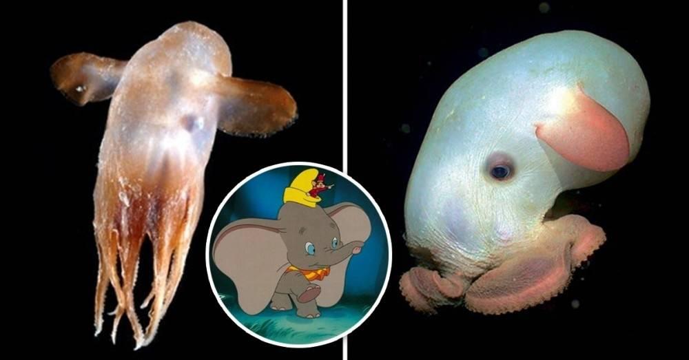 Los 12 animales más extraños que nunca imaginaste que existían