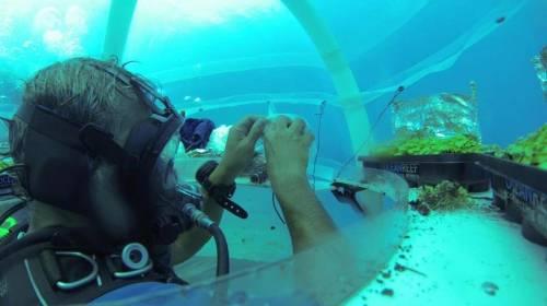 Invernaderos submarinos: innovadoras huertas que viven bajo el agua
