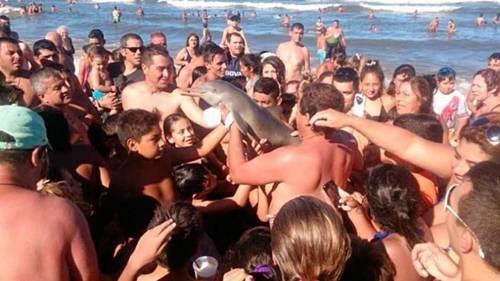 Este delfín murió cuando turistas lo sacaron del agua para fotografiarlo