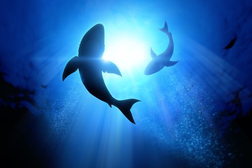 El tiburón blanco puede ayudar a salvar vidas