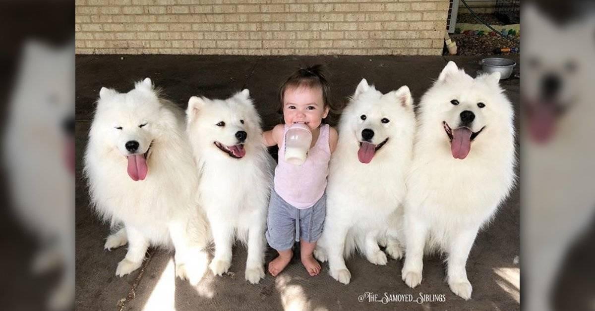 Mira cómo sus perritos le enseñaron a caminar a esta niña