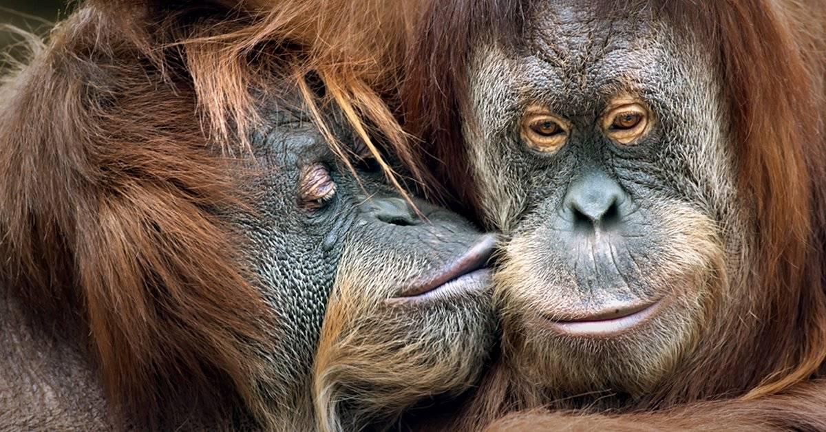¿Cuáles son los derechos de los animales? Si los amas debes conocerlos