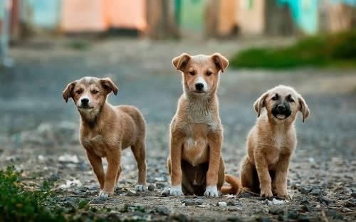 7 razones que te harán querer adoptar un perro mestizo