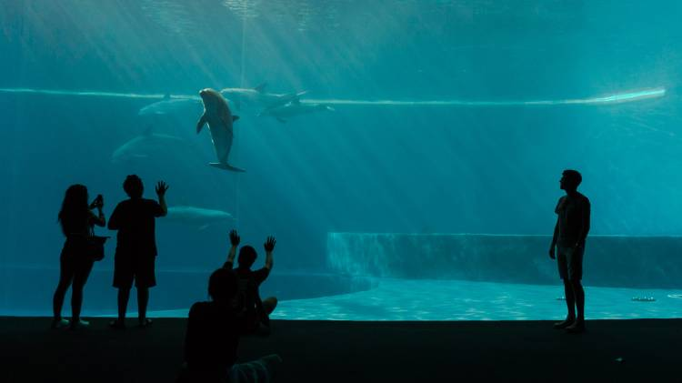 Delfines cautivos