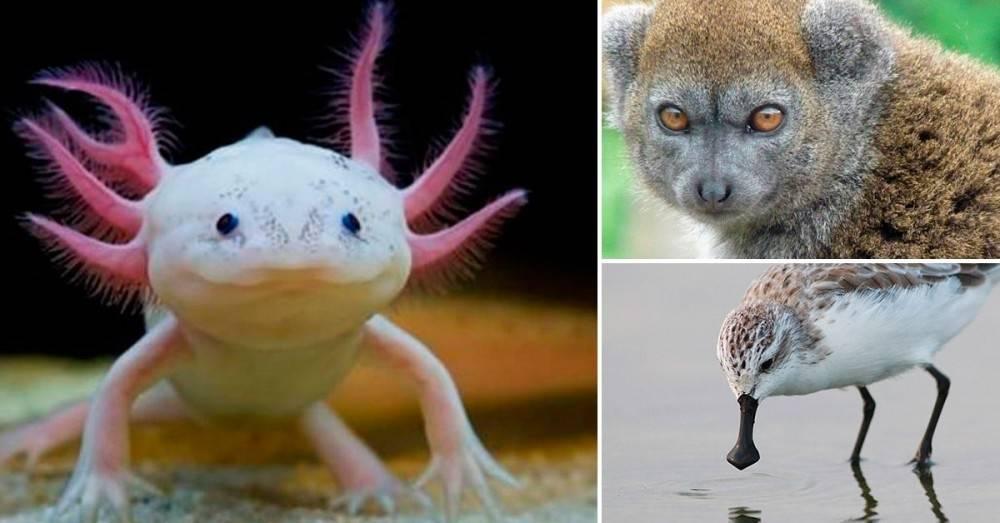 Estamos terminando con la vida: 13 animales hermosos que estarán extintos en ..