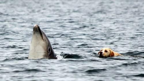 Ben y Duggie: un perro y un delfín que nadan juntos