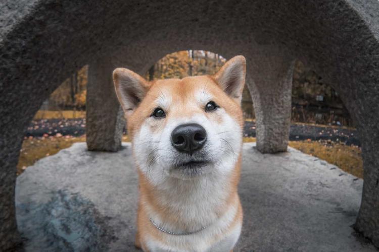 perros curiosidades