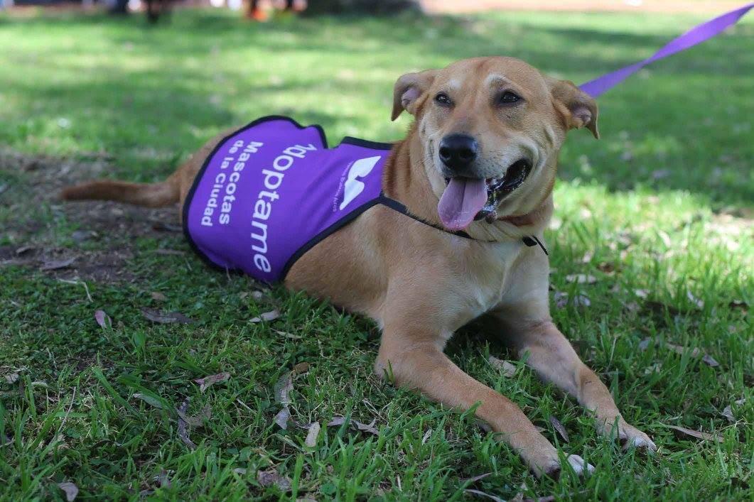 Jornadas de adopción en Buenos Aires: conocé a tu próxima mascota