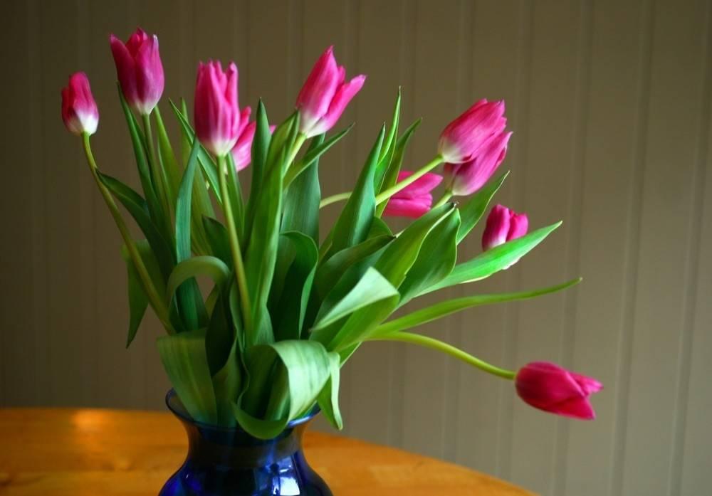 Cómo cultivar tulipanes en tu hogar